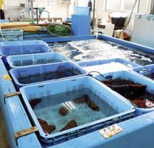 活魚・水産加工品